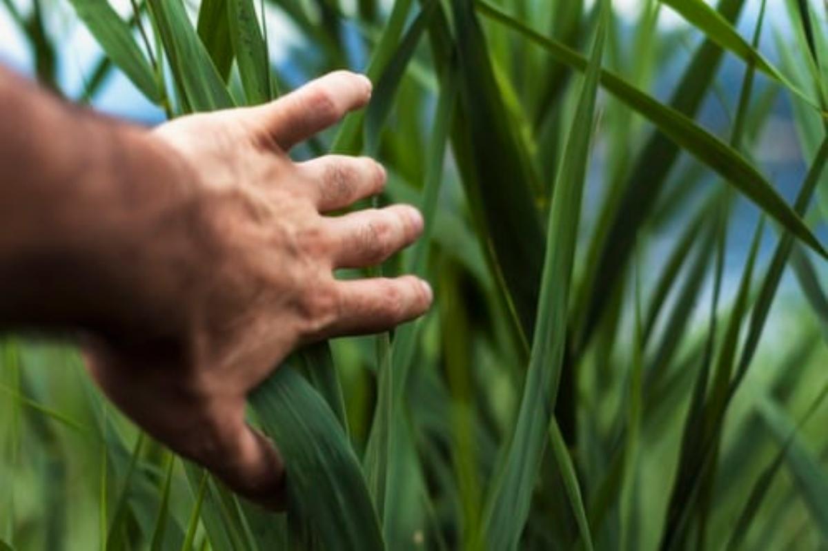 Αγροτουρισμός: Τι είναι και γιατί μας ενδιαφέρει