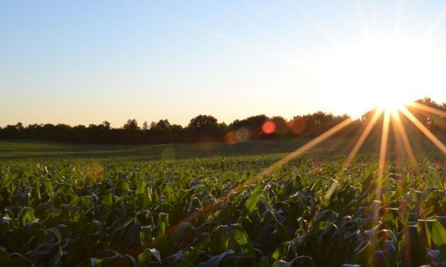 Είναι ο αγροτικός τομέας οπισθοδρομικός;