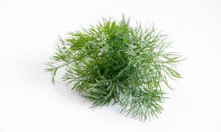 Οι ιδιότητες του άνηθου: Ένα δημοφιλές μαγειρικό βότανο