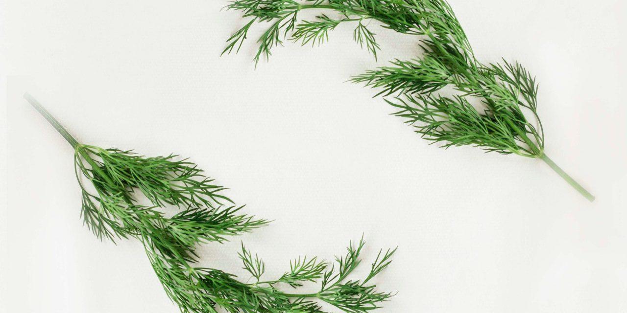 Άνηθος: Ιστορία και Παράδοση του σημαντικού φυτού