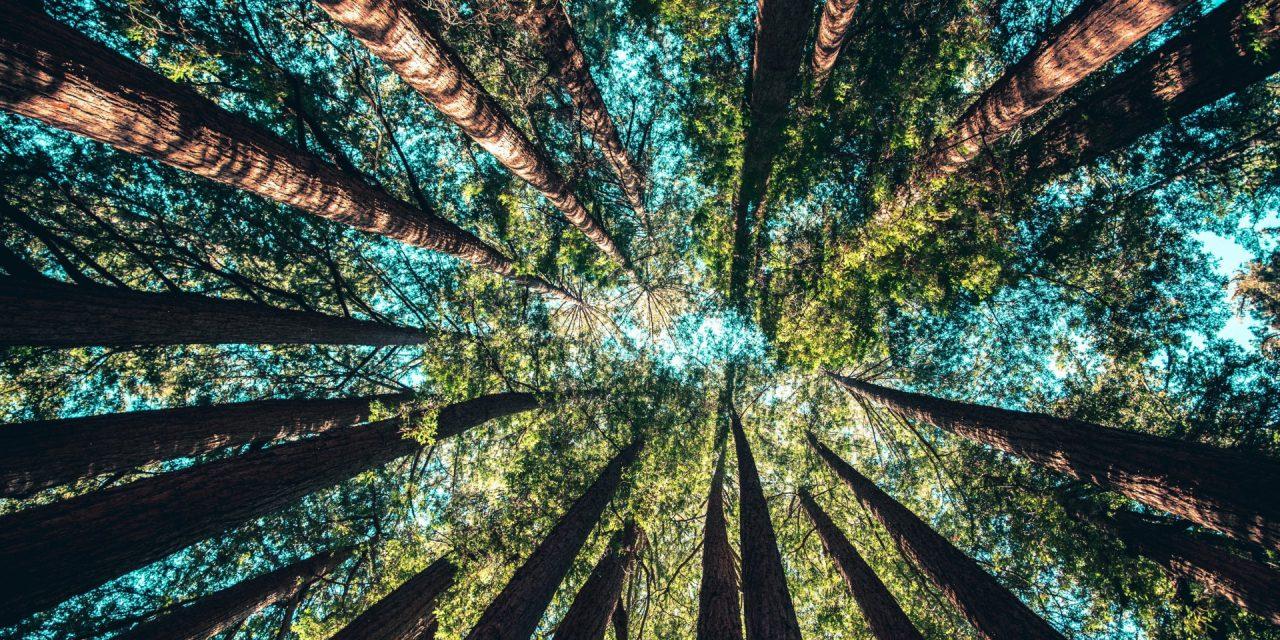 Το 40% των δέντρων στην Ευρώπη απειλούνται με εξαφάνιση