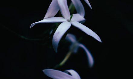 Τα είδη του γιασεμιού