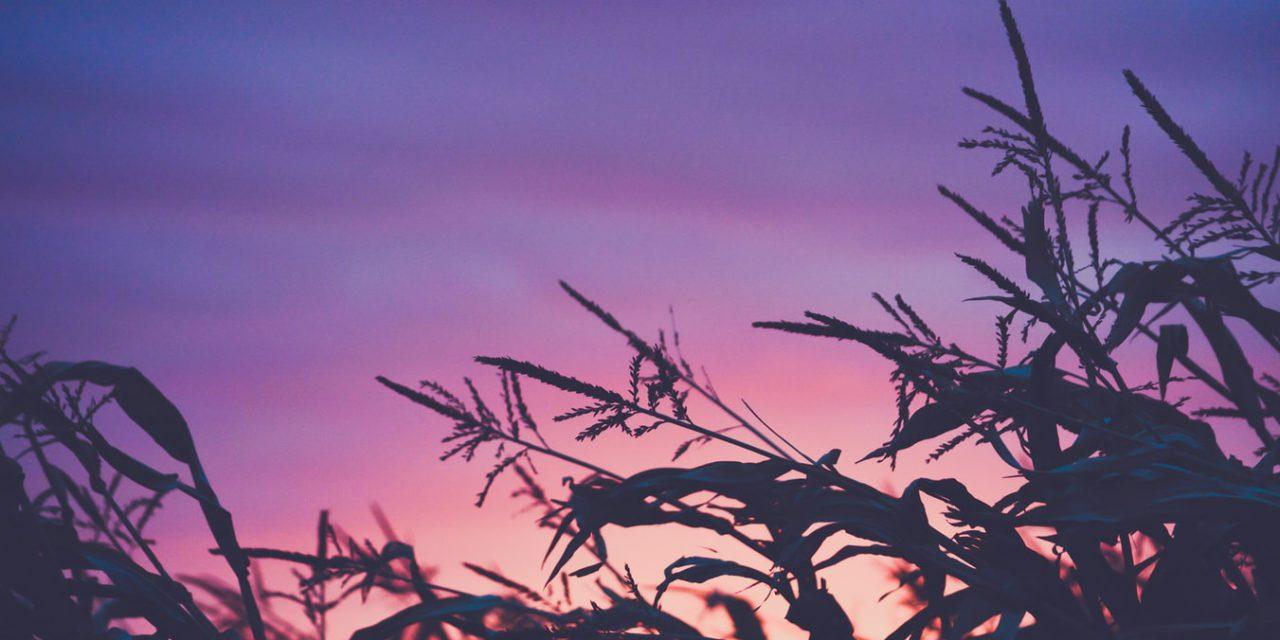 7 λόγοι που η γεωργία είναι σημαντική