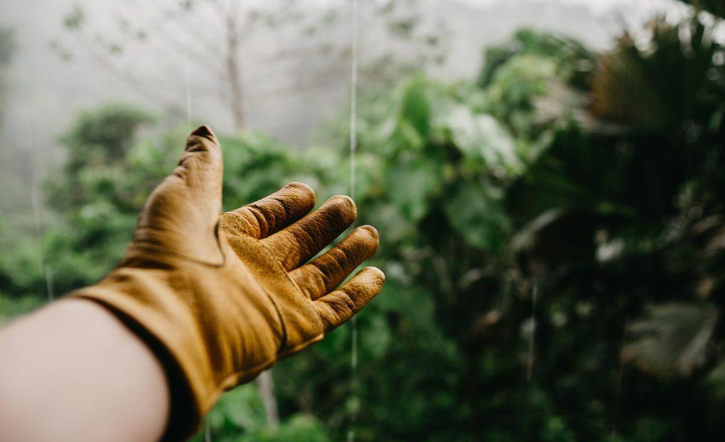 10 συχνές και χρήσιμες ερωτήσεις – απαντήσεις για τα βότανα