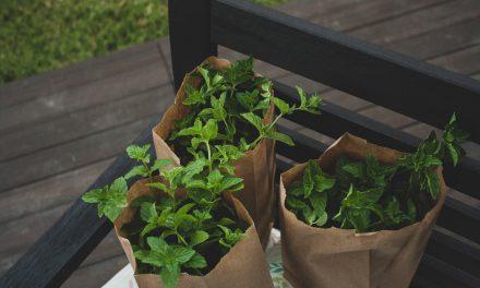 Πώς να αποθηκεύσεις τα βότανα του κήπου και της γλάστρας