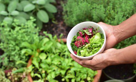 Τι είναι ο βοτανικός κήπος: Ποια είδη μπορείς να φτιάξεις