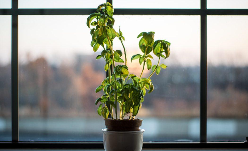 Πώς να μεγαλώσεις βότανα σε εσωτερικό χώρο
