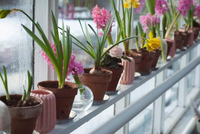 Αρωματικά φυτά και βότανα στη γλάστρα