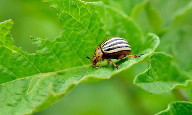 Η αντιμετώπιση των ζιζανίων στη βιολογική καλλιέργεια