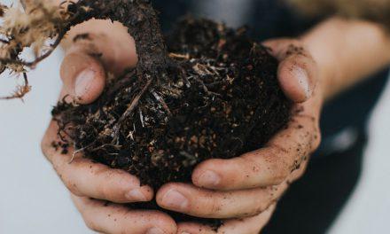 Πώς να ξηράνεις το υγρό χώμα σε φυτά εσωτερικού χώρου