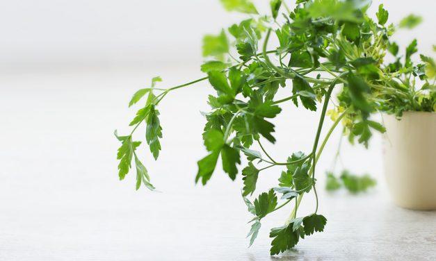 Πώς να φυτέψεις μαϊντανό στον κήπο ή τη γλάστρα