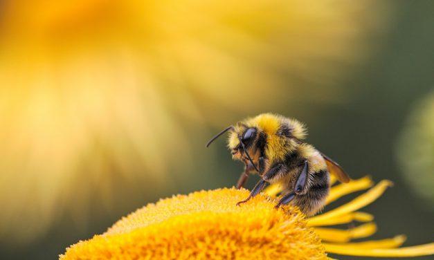 Πώς εξαρτάται η ζωή μας από τις μέλισσες;
