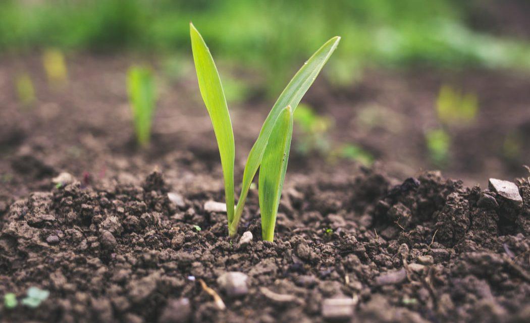 Πώς γίνεται ο πολλαπλασιασμός με σπόρους