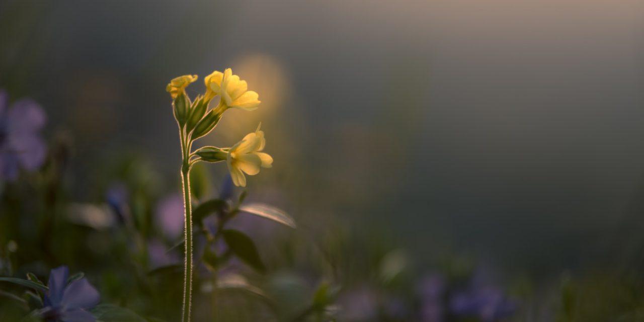 Τι σχέση έχει το Λουλούδι του Δαρβίνου με τις διεθνείς κουζίνες