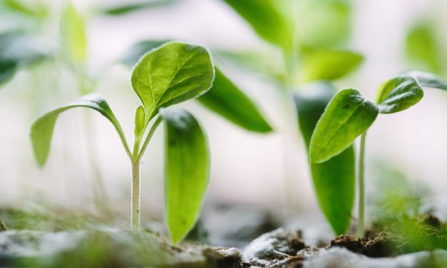 Τρόποι πολλαπλασιασμού Αρωματικών Φαρμακευτικών Φυτών