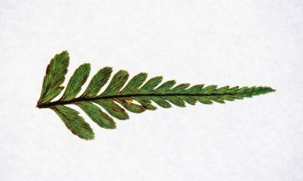 Τι είναι τα προσαρμογόνα βότανα και πώς βοηθάνε