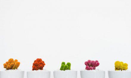 Πώς να καλλιεργήσεις βότανα στην ίδια γλάστρα