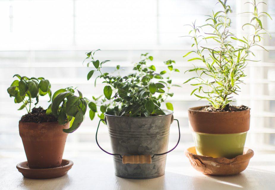 Πώς να φροντίσεις τα βότανα στις γλάστρες τον χειμώνα