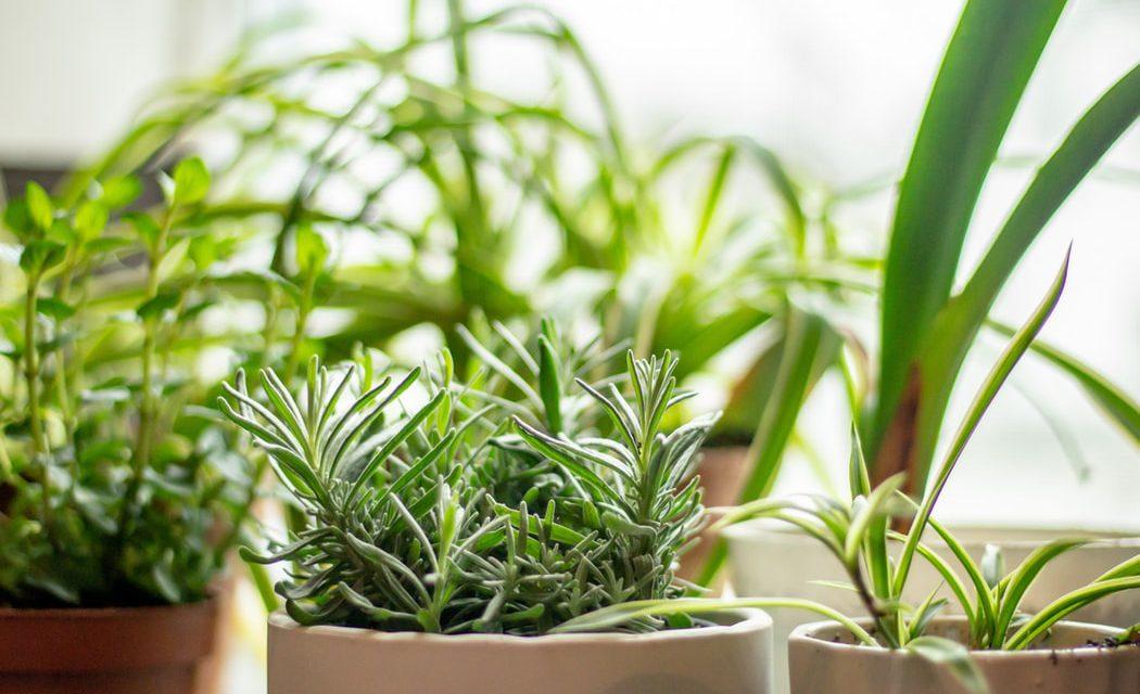 Πώς να φτιάξεις τον δικό σου βοτανικό κήπο
