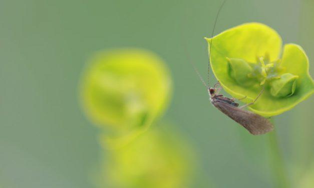 Ηχογραφήσεις επιστημόνων αποκαλύπτουν ότι τα φυτά μιλάνε