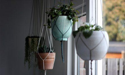 Πώς να φροντίσεις τις κρεμαστές γλάστρες σε εσωτερικό χώρο