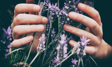 Πώς να μεγαλώσεις λεβάντα στον κήπο