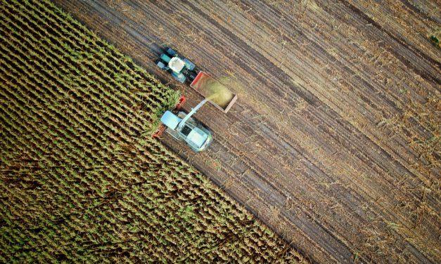 6 βήματα για την παραγωγή των αρωματικών φυτών στο χωράφι