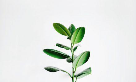 Tα φυτά αισθάνονται πόνο; Αποκαλυπτικό βίντεο