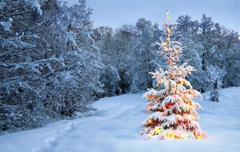 Το δέντρο των Χριστουγέννων: Η ιστορία του εθίμου