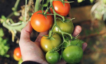 Λαχανόκηποι στα Σχολεία της Κοινότητας που βασίζονται στη μέθοδο Φρενέ