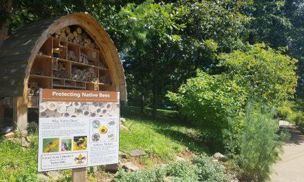 Ξενοδοχεία για άγριες μέλισσες σε όλο τον κόσμο
