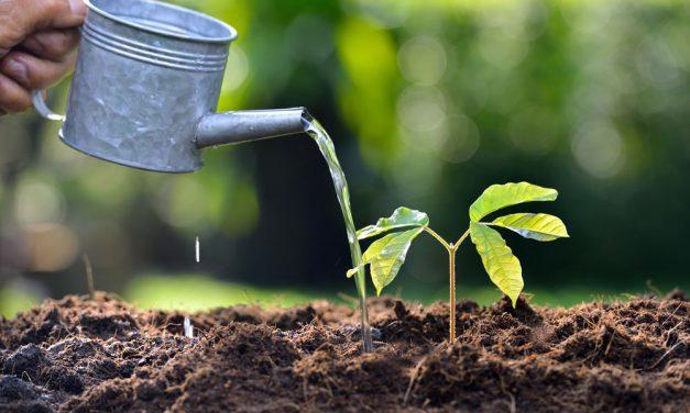 Πως επηρεάζουν το έδαφος και το νερό την ανάπτυξη των φυτών