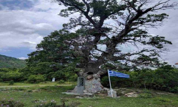 Το εντυπωσιακό εκκλησάκι στην Κόνιτσα, χτισμένο μέσα σε δέντρο 300 ετών
