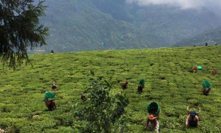 Περιοχή στην Ινδία απαγορεύει τα φυτοφάρμακα: 100% βιολογικές καλλιέργειες – αποκαλυπτικό βίντεο