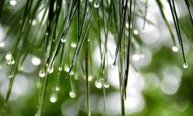 Πώς επηρεάζει το κλίμα την ανάπτυξη και επιβίωση των φυτών