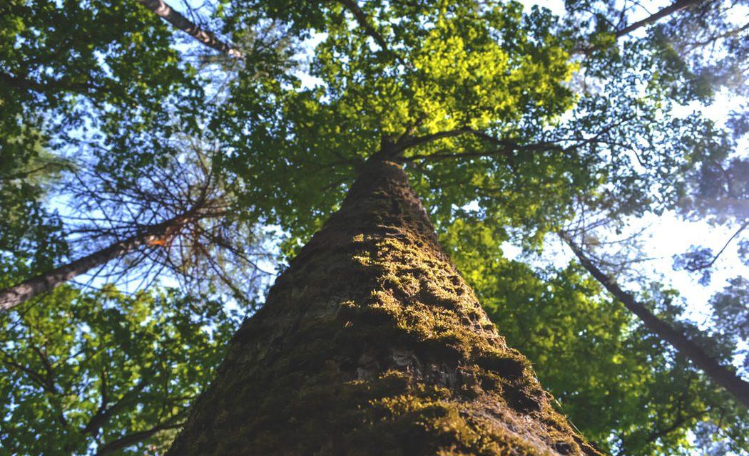 """Κομοτηνή: """"Φυτεύουμε 1.000 δέντρα στην πανεπιστημιούπολη"""""""