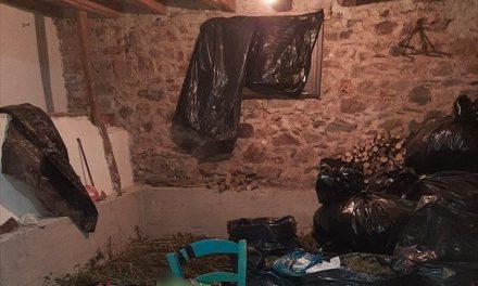 «Ξηλώθηκε» δίκτυο καλλιέργειας και διακίνησης χασίς στη Λακωνία