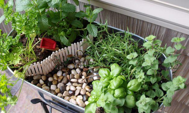 Μεσογειακός κήπος: Πώς να τον φτιάξεις με ελληνικά βότανα