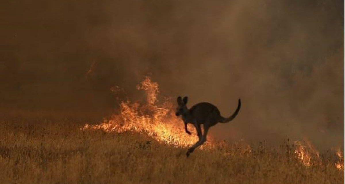 Οι πυρκαγιές στην Αυστραλία κατέστρεψαν 32 υπό εξαφάνιση είδη φυτών και ζώων