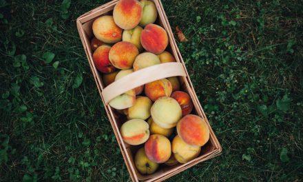 Παραγωγοί Ημαθίας: Νέες τεχνολογίες τροποποιημένης ατμόσφαιρας δίνουν διάρκεια ζωής στα φρούτα