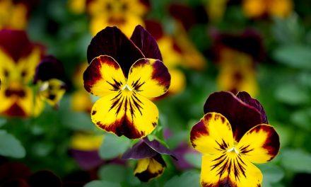 6 όμορφα λουλούδια του χειμώνα & tips για το καθένα