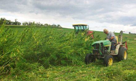 Η κλιματική αλλαγή τρέφει τα ζιζάνια και απειλεί τις καλλιέργειες