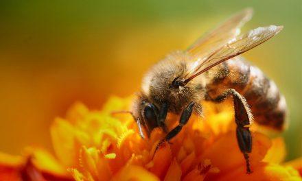 Προστατεύουμε τη σοδειά, τις αμυγδαλιές και τις μέλισσες