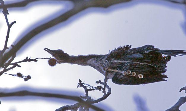 Λίμνη της Καστοριάς: Πτώματα πουλιών βρέθηκαν μπλεγμένα σε δίχτυα