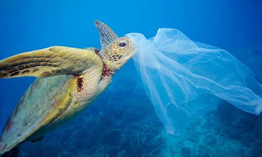 """Πλαστικά έχει καταπιεί πάνω από το 70% θαλάσσιων χελωνών του """"ΑΡΧΕΛΩΝ"""""""