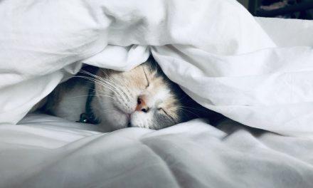 Σαν σήμερα 13 Μαρτίου: Παγκόσμια Ημέρα Ύπνου