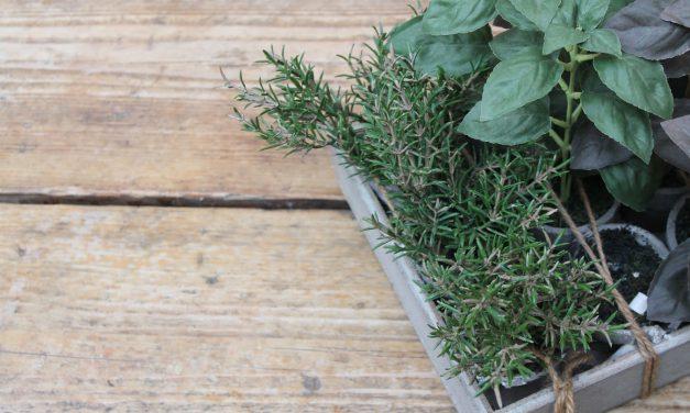 Φυτεύουμε αρωματικά φυτά σε γλάστρα