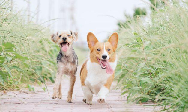 Σαν σήμερα 4 Απριλίου: Παγκόσμια Ημέρα Αδέσποτων Ζώων