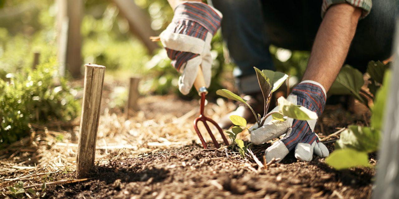 18 συμβουλές κηπουρικής για να κερδίσεις χρόνο, χρήμα και προσπάθεια