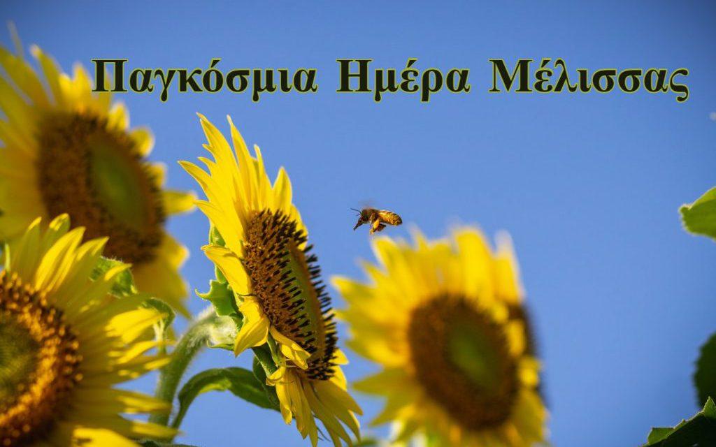 Σαν σήμερα 20 Μαΐου: Παγκόσμια Ημέρα Μέλισσας